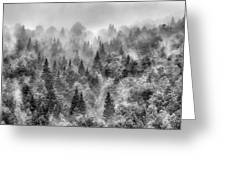 Pinsapos Into The Woods. Bw. Foggy Sunrise Greeting Card