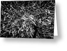Plant Black And White Abstract Greeting Card