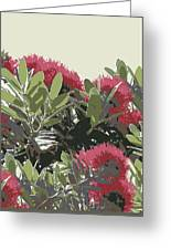 New Zealand Christmas Tree.Pohutukawa New Zealand Christmas Tree