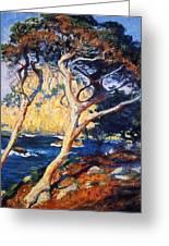 Point Lobos Trees 1919 Greeting Card