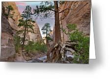 Ponderosa Pines In Slot Canyon Greeting Card