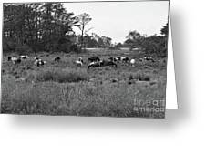 Pony Herd Bnw Greeting Card