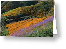 Poppies Bluebells And Rolling Hills Greeting Card