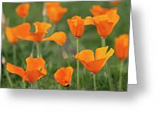 Poppies In The Breeze Greeting Card