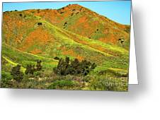Poppy Hills And Gullies Greeting Card