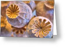 Poppy Seed Pods 2 Greeting Card