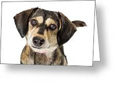 Portrait Cute Medium Size Crossbreed Dog Greeting Card