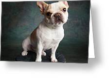 Portrait Of A French Bulldog Greeting Card