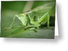 Portrait Of A Great Green Bush-cricket Sitting On A Leaf Greeting Card