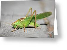 Portrait Of A Great Green Bush-cricket Sitting On The Pavement Greeting Card