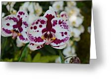 Portrait Of An Orchid Greeting Card