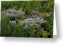 Prairie Bouquet  Greeting Card