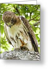 Predator With Prey Greeting Card