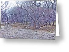 Prescott Arizona Watson Lake Bayou Trees Scrub Water Grasses 3142019 4916 Greeting Card