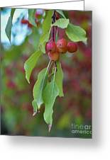 Pretty Cherries Hanging From Tree Greeting Card