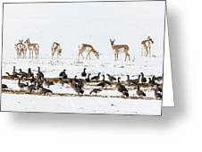 Pronghorn Antelope And Geese Greeting Card