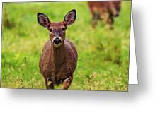 Protective Mother Deer Greeting Card by Dan Sproul