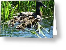 Proud Mother Duck Greeting Card