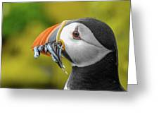 Puffin With A Mouthful Greeting Card