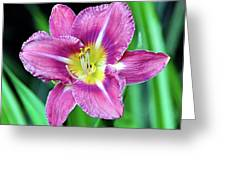 Purple And Yellow Flower Greeting Card