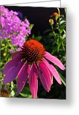 Purple Coneflower Greeting Card