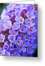 Purple Flowers In The Morning Dew Greeting Card