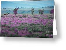 Purple Grain Greeting Card