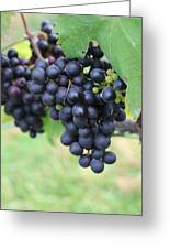 Purple Grape Bunches 20 Greeting Card