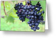 Purple Grape Bunches 21 Greeting Card