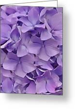 Purple Hydrangea  Greeting Card