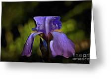 Purple Iris And Dewdrops II Greeting Card