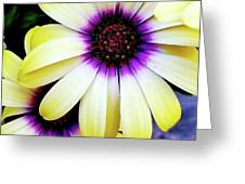 African Daisy Greeting Card by Deahn      Benware