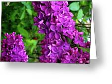 Purple Lilac Parade Greeting Card by Deahn      Benware