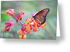 Queen Butterfly On Mexican Bird Of Paradise  Greeting Card
