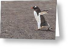 Quick Hurry - Gentoo Penguin By Alan M Hunt Greeting Card by Alan M Hunt