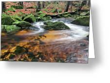 Rapids On Jedlova Brook, Jizera Mountains,  Czech Republic Greeting Card