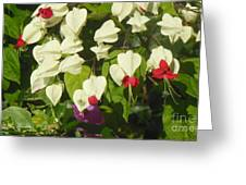 Red And White Surprise 2 Greeting Card