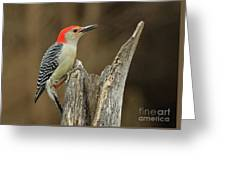 Red-belly At Stump Greeting Card