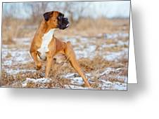 Red Boxer Dog Standing Outdoors Greeting Card
