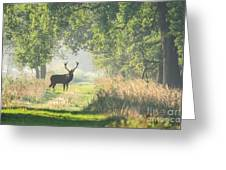 Red Deer In The Forest Greeting Card