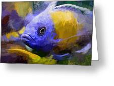 Red Fin Borleyi Cichlid Artwork Greeting Card by Don Northup