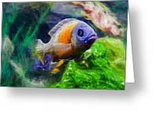 Red Fin Borleyi Cichlid Greeting Card by Don Northup