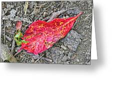Red Leaf On Green's Hill Greeting Card