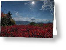 Red Leaves In The Sun Greeting Card by Dan Friend