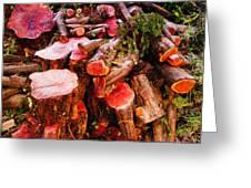 Red Logs Greeting Card