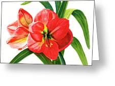 Red Orange Amaryllis Square Design Greeting Card
