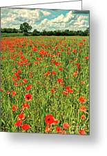 Red Poppies Meadow Greeting Card