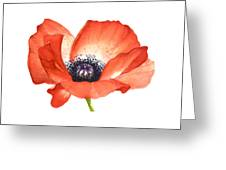 Red Poppy Flower, Image For Prints On Tshirt Greeting Card