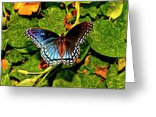 Red-spotted Purple Butterfly 017 Greeting Card