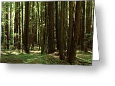 Redwood Trees Armstrong Redwoods St Greeting Card